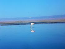 Flamingo nella Laguna Chaxa
