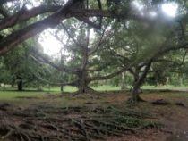 giardino botanico di Peradeniya